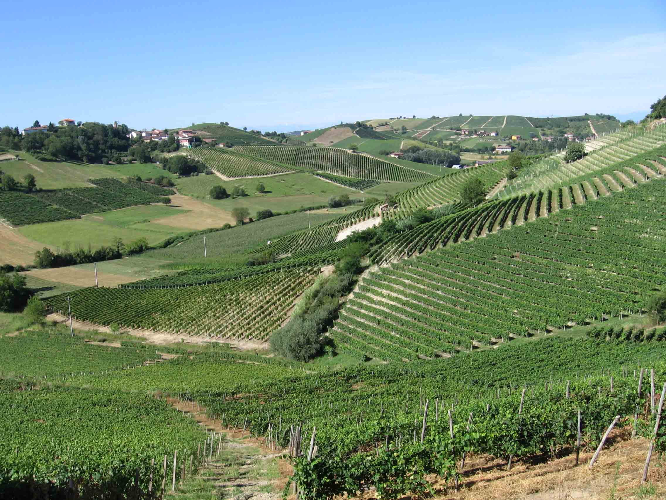 panorama-grignolino.jpg