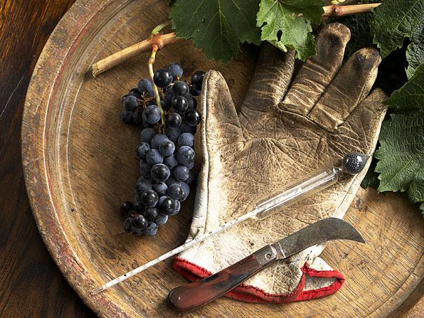 winemaker (1).jpg