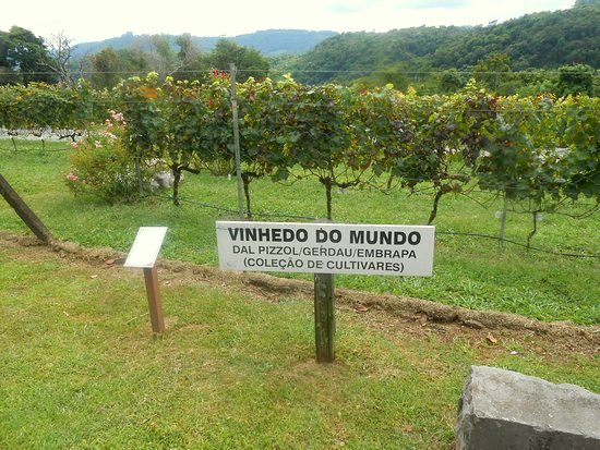 vinhedo-do-mundo-no.jpg